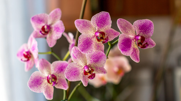 Promix_Gardening_How to care for your orchid