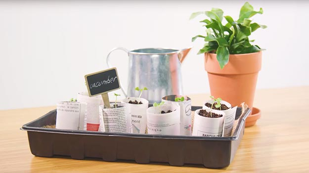 Promix_gardening_DIY_NewspaperSeedlings_06