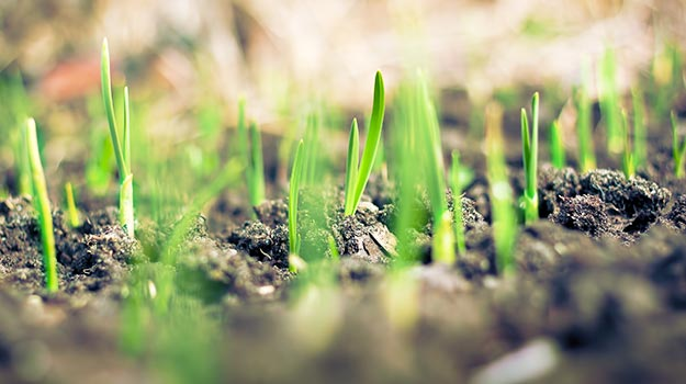Establishing a new lawn from seed
