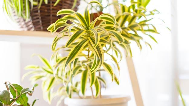 Five indestructible houseplants