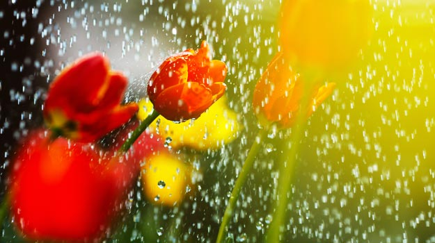 promix-gardening-gardening-when-its-raining