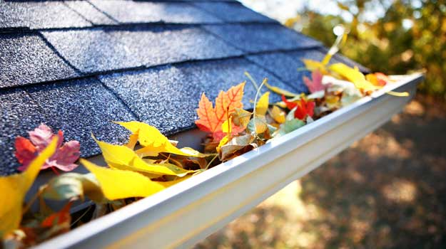 Clean debris from gutters