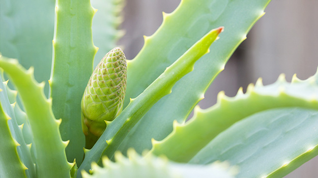 5 Easy-to-grow Cactus and Succulents