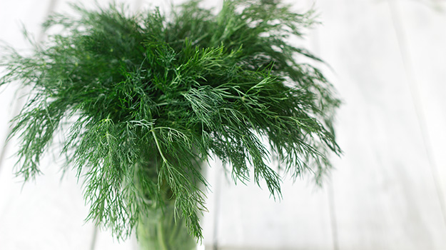 Fresh dill in a glass