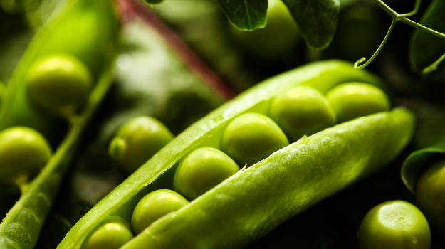 Peas are easy vegetables to grow for beginners