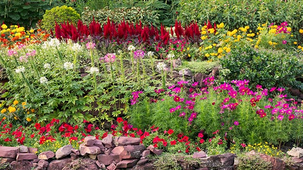 Colorful healthy flower garden