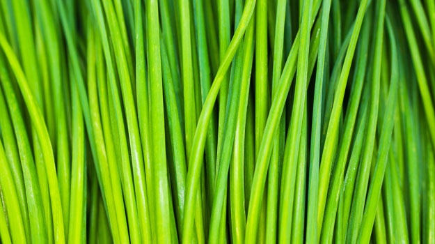 How to Grow Chives - Beautiful chives