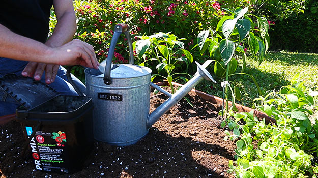How to use fertilizers when growing vegetables