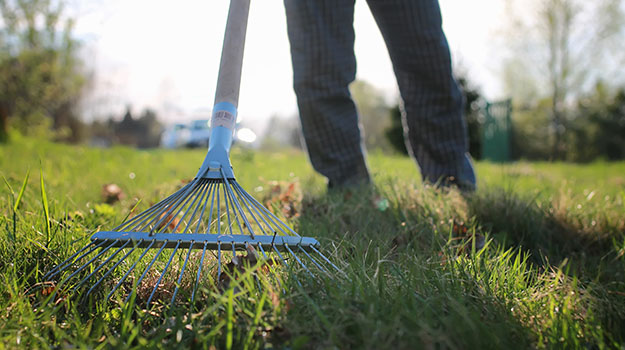 Why You Need To Rake Your Lawn?