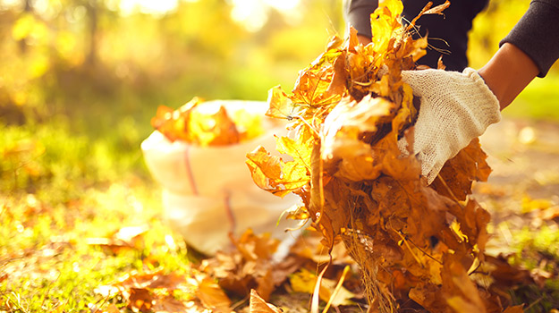 Recycle your autumn leaves