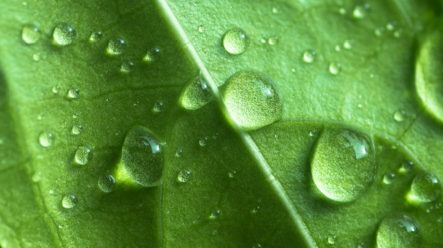 Water droplets on plant's leaf