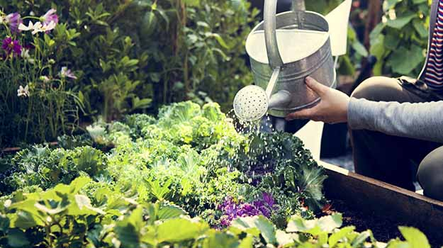 What to do in May - Watering vegetable garden