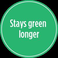 Stays green longer