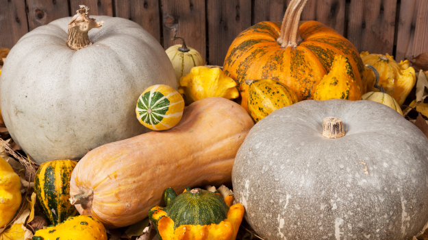 8 winter squash varieties