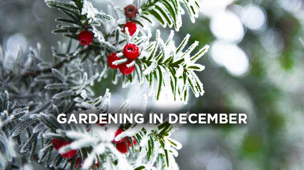 What to do in the garden in December