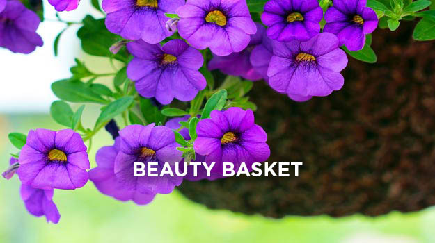 Make a hanging basket