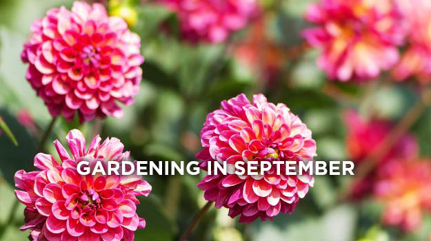What to do in the garden in September