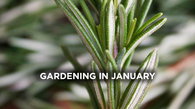 What to do in the garden in January
