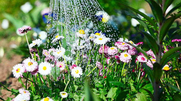 When to Water a Garden