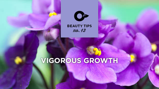 Take care of African violets