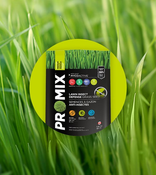 LAWN INSECT DEFENSE GRASS SEED