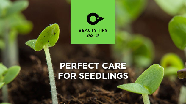 6 tips for successful seedlings!