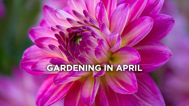 What to do in the garden in April