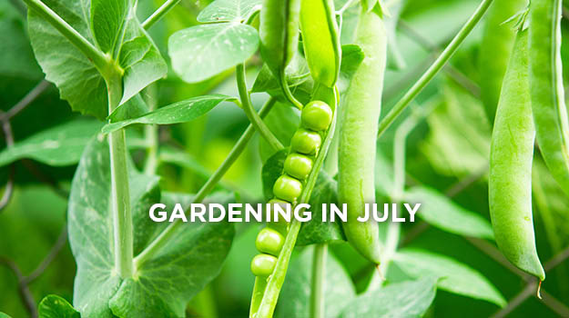 promixgardening-What-To-Do-In-Garden-In-July