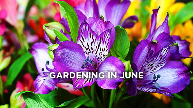 promix_gardening_what_to_do_in_the_garden_in_june