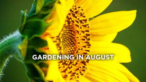 promix-gardening-what-to-do-in-the-garden-in-august