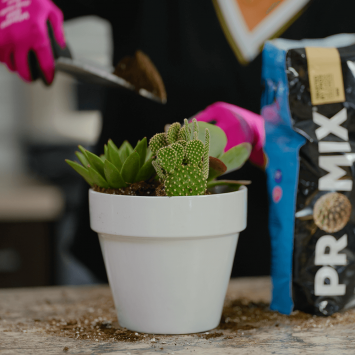 PRO-MIX Premium Cactus Mix US