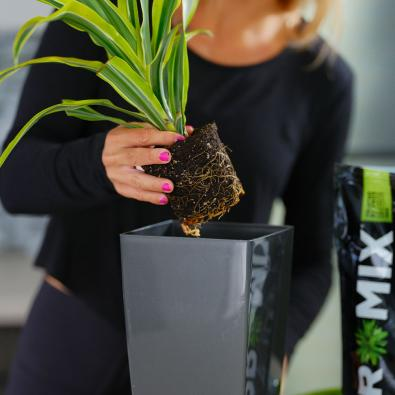 PRO-MIX Premium Tropical Plant Mix