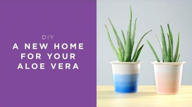 Embedded thumbnail for A new home for your Aloe Vera