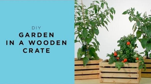 Embedded thumbnail for Garden in a wooden crate