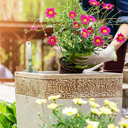 Planting flowers in containers