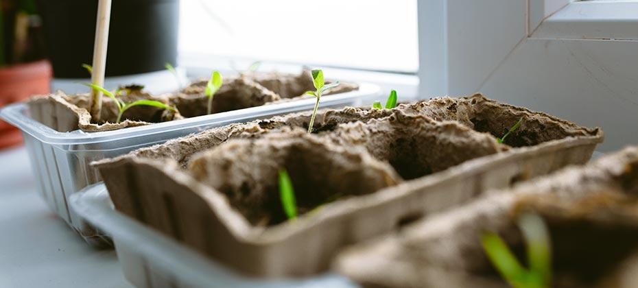 The best time to start seeds indoors