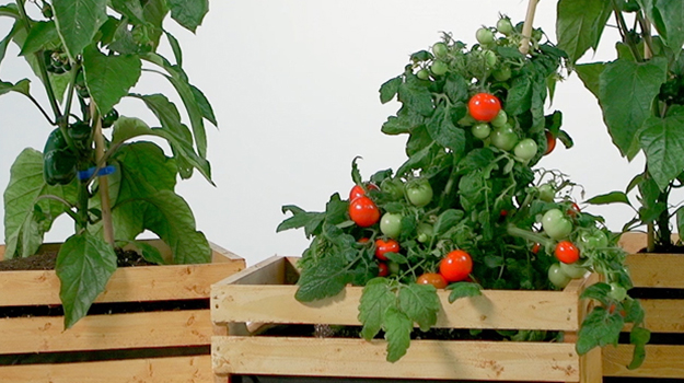Garden in a wooden crate DIY Video